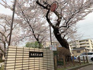 桜 ローカルスポット